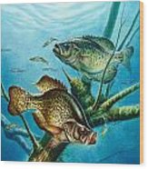 Crappie And Root Wood Print