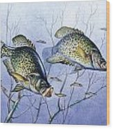 Crappie Brush Pile Wood Print by JQ Licensing