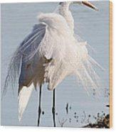 Crazy Egret Feathers Wood Print