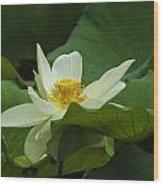 Cream Colored Lotus Wood Print