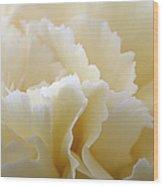 Cream Coloured Carnation, Close-up Wood Print