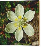 Cream Cup In Park Sierra-ca Wood Print