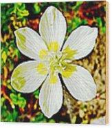 Cream Cup In Park Sierra Near Coarsegold-california Wood Print