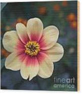 Creamy Dahlia Wood Print