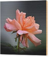 Creamy Peach Rose Wood Print
