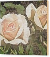Creamy Roses Wood Print