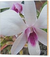 Creamy White And Hot Pink Orchid Wood Print