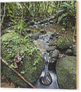 Creek In Mountain Rainforest Costa Rica Wood Print