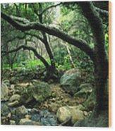 Creek In Woods Wood Print by Kathy Yates