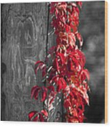 Creeper On Pole Desaturated Wood Print