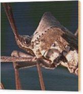 Creepy Bug Wood Print