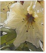 Creme Rhody Wood Print