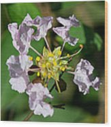 Crepe Myrtle Blossom Ring Wood Print