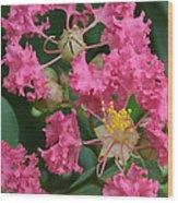 Crepe Myrtle Macro Wood Print