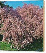 Crepey Myrtle Tree In Istanbul-turkey Wood Print