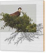 Crested Caracara Wood Print