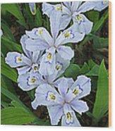 Wild Blue Crested Iris Wood Print