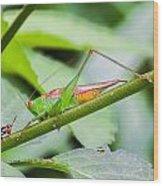 Cricket Meets Grasshopper Wood Print