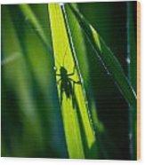 Cricket Silhouette Wood Print