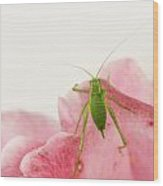 Crickets - Gryllidae Wood Print