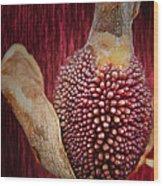 Crimson Canna Lily Bud Wood Print