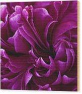 Crimson Chiffon Wood Print