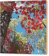 Crimson Foliage Wood Print