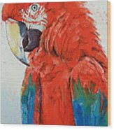 Crimson Macaw Wood Print