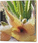 Crimson Starfish Flying Plant Bloom Wood Print
