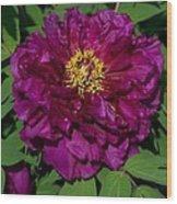 Crinoline Wood Print