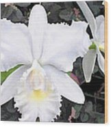 Crisp White Orchids In A Shady Garden Wood Print