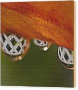 Criss Cross Water Drop Wood Print