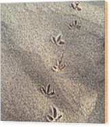 Critter Tracks In The Sand Wood Print