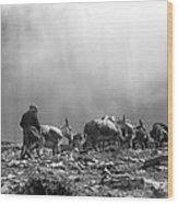 Donkey Train On Croagh Patrick Wood Print
