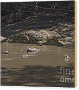 Crocodile   #7282 Wood Print