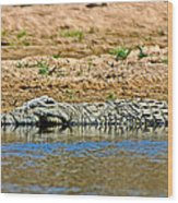 Crocodile In Watering Hole In Kruger National Park-south Africa Wood Print