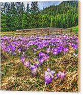 Crocus Flower Valley Wood Print