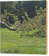 Crooked Apple Tree Wood Print