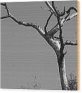 Crooked Tree Black And White Wood Print