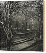 Crooked Tree Enchanted Path Wood Print