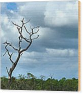 Crooked Tree On Crooked Island Wood Print by Julie Dant