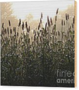 Crops In Fog Wood Print by Olivier Le Queinec