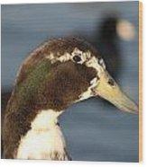 Cross Breed Duck Wood Print