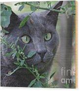 Cross Eyed Cat Wood Print