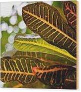 Croton Wood Print