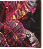 Croton Leaves In Black And Red Wood Print
