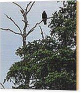 Crow - Black  Bird - Loud Call Wood Print