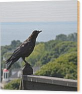 Crow Wood Print by Brett Geyer