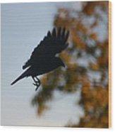 Crow In Flight 1 Wood Print