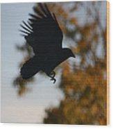 Crow In Flight 2 Wood Print